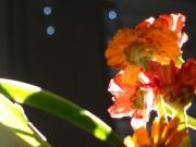 20 schwarz Blume